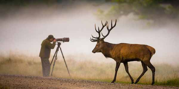 Wildlife Photography Tips for Beginners | 8 USEFUL Tips & Techniques!